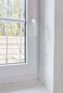 Jak odstranit plíseň na stěnách v bytě navždy