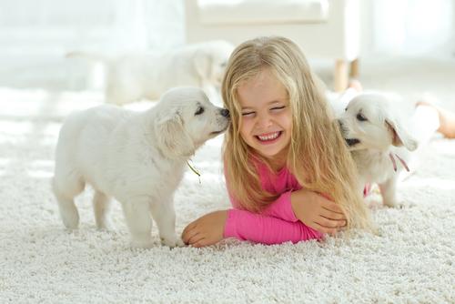 Čištění koberců. Pokud máte doma zvířecí mazlíčky, oslovte odborníky. Tepování a dezinfekce Brno